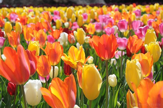 ดอกไม้ภายในสวนอังกฤษ