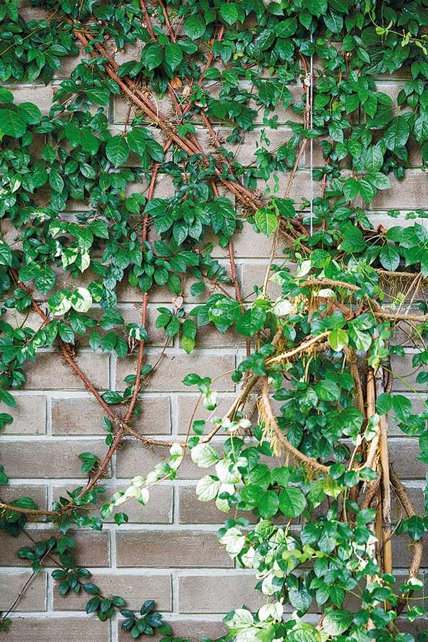 8. ต้นดอกฟุ้งกระจาย หรือ ดอกสลิด