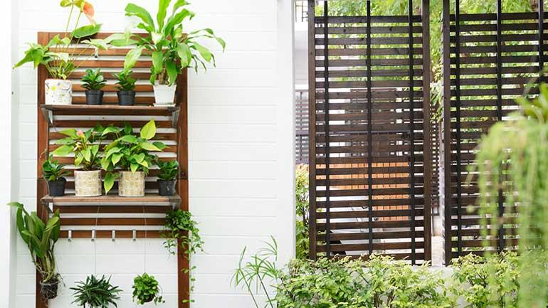 บ้านที่มีการจัดสวนไม้ระแนง ข้างบ้าน